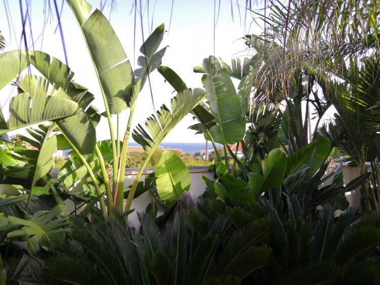 Boda civil en Punta Carnero Algeciras